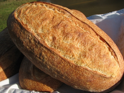 Austrian Motherdough Bread