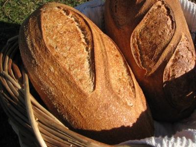 Morph Bread