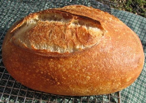 Northwest Starter Bread